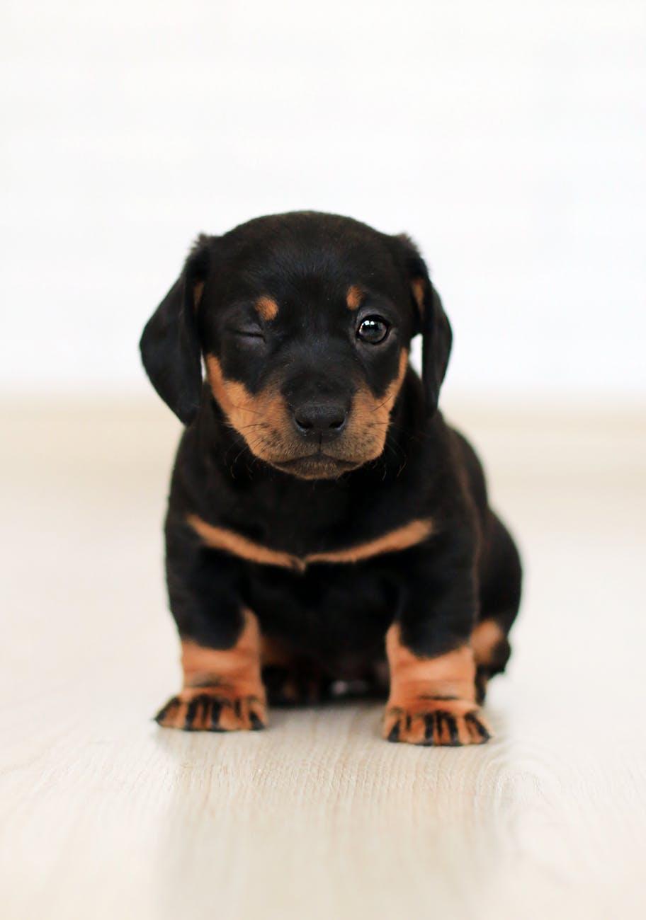 puppy winking