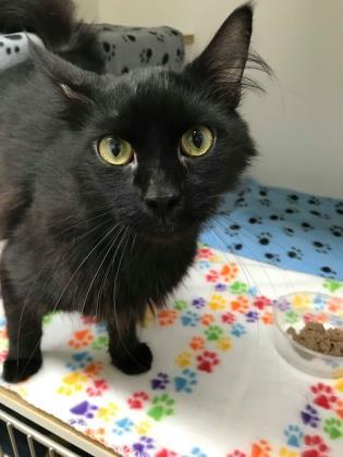 Kiwi, Black Cat