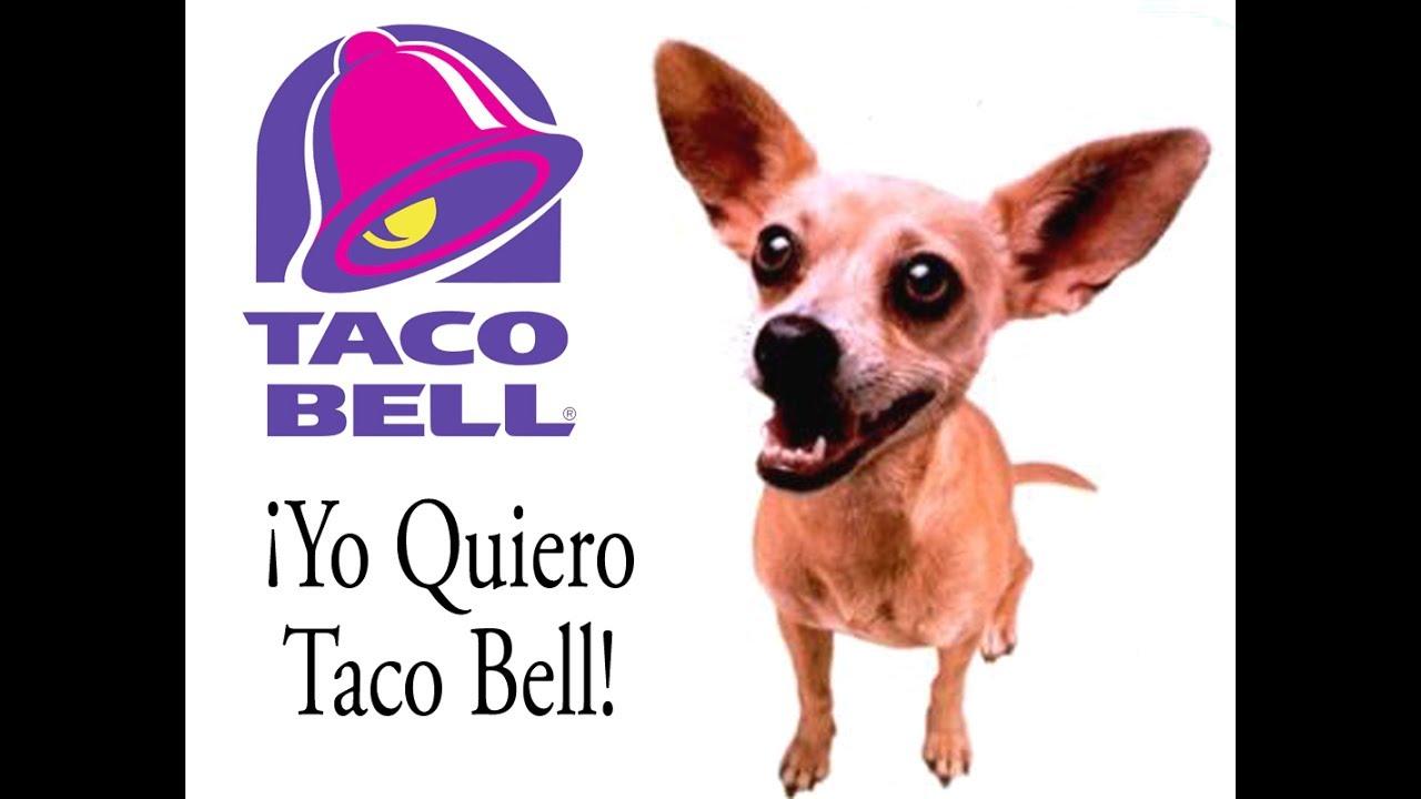 """¡Yo quiero Taco Bell!"" Gidget Chihuahua Taco Bell Fast Food"