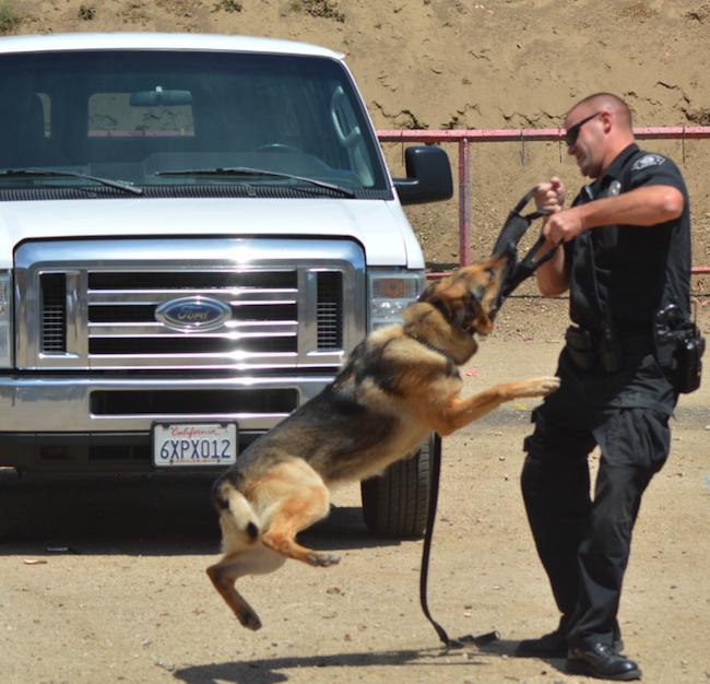police dog with handler