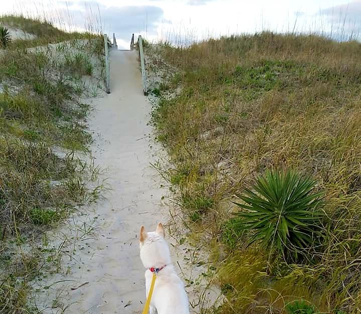 dog walk, sand dune
