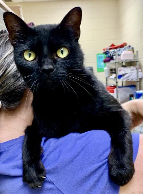 Beems, Black Cat