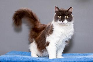 Fluffy, Cat