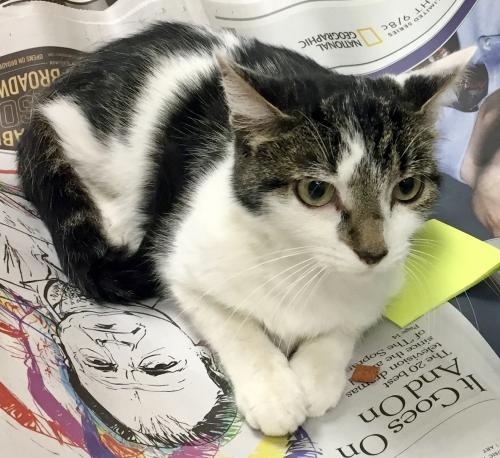 Kiki, Cat