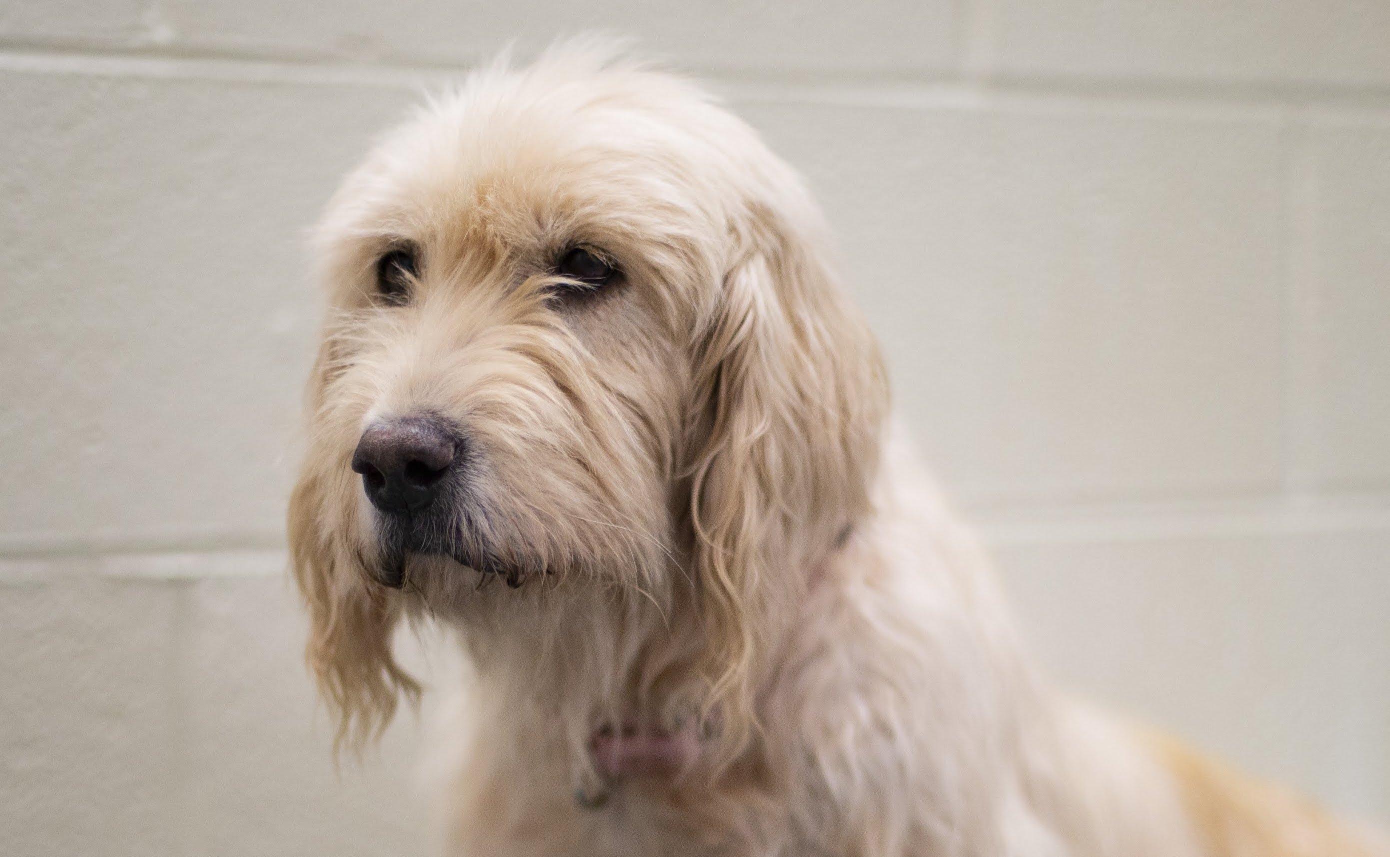 Sally, Terrier Dog