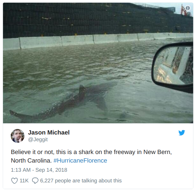 hurricane florence shark hurricane tweet
