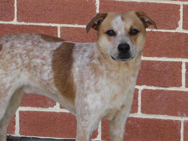 Lewis, Dog