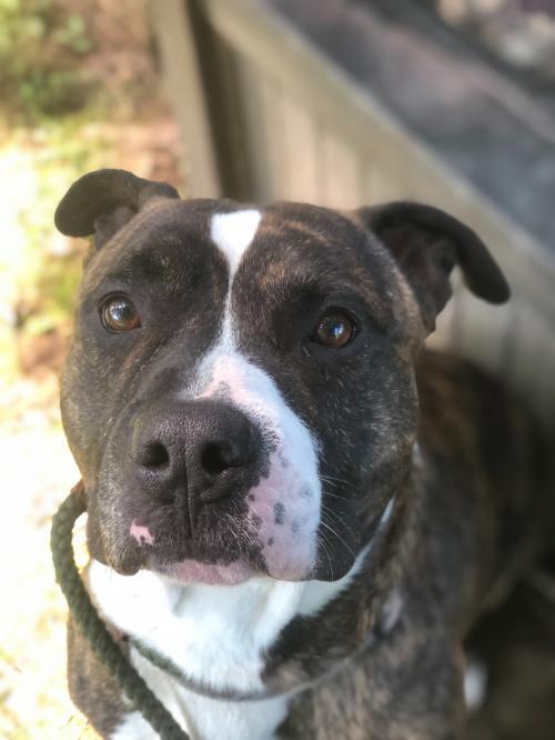 Titus, Dog