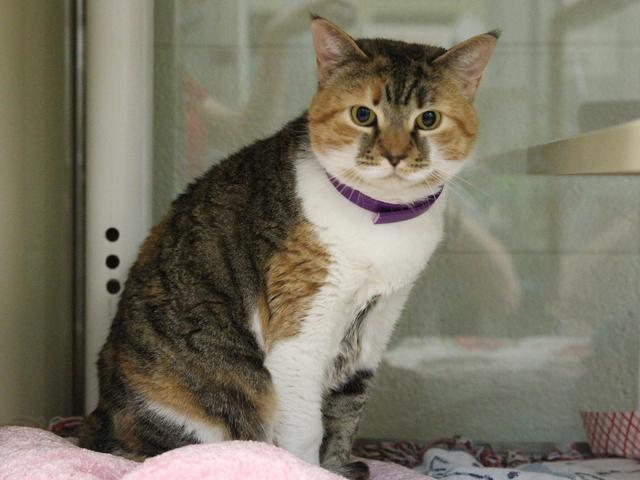 Georgia Peach Cat