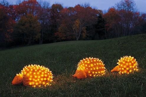 pumpkin porcupine
