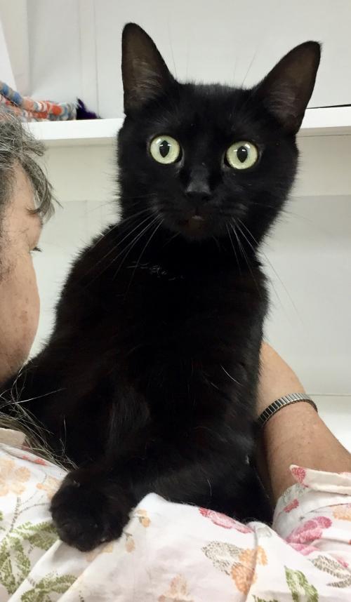 Moppet, Black Cat