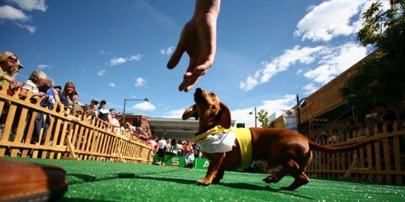 Long Dog Derby