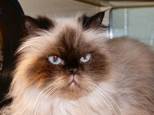 Romeo, Cat