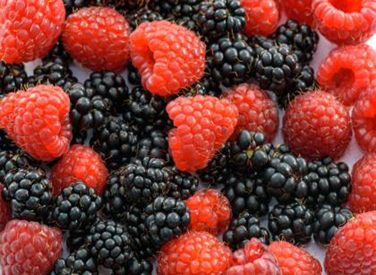 Blackberries and raspberries can upset the stomach.