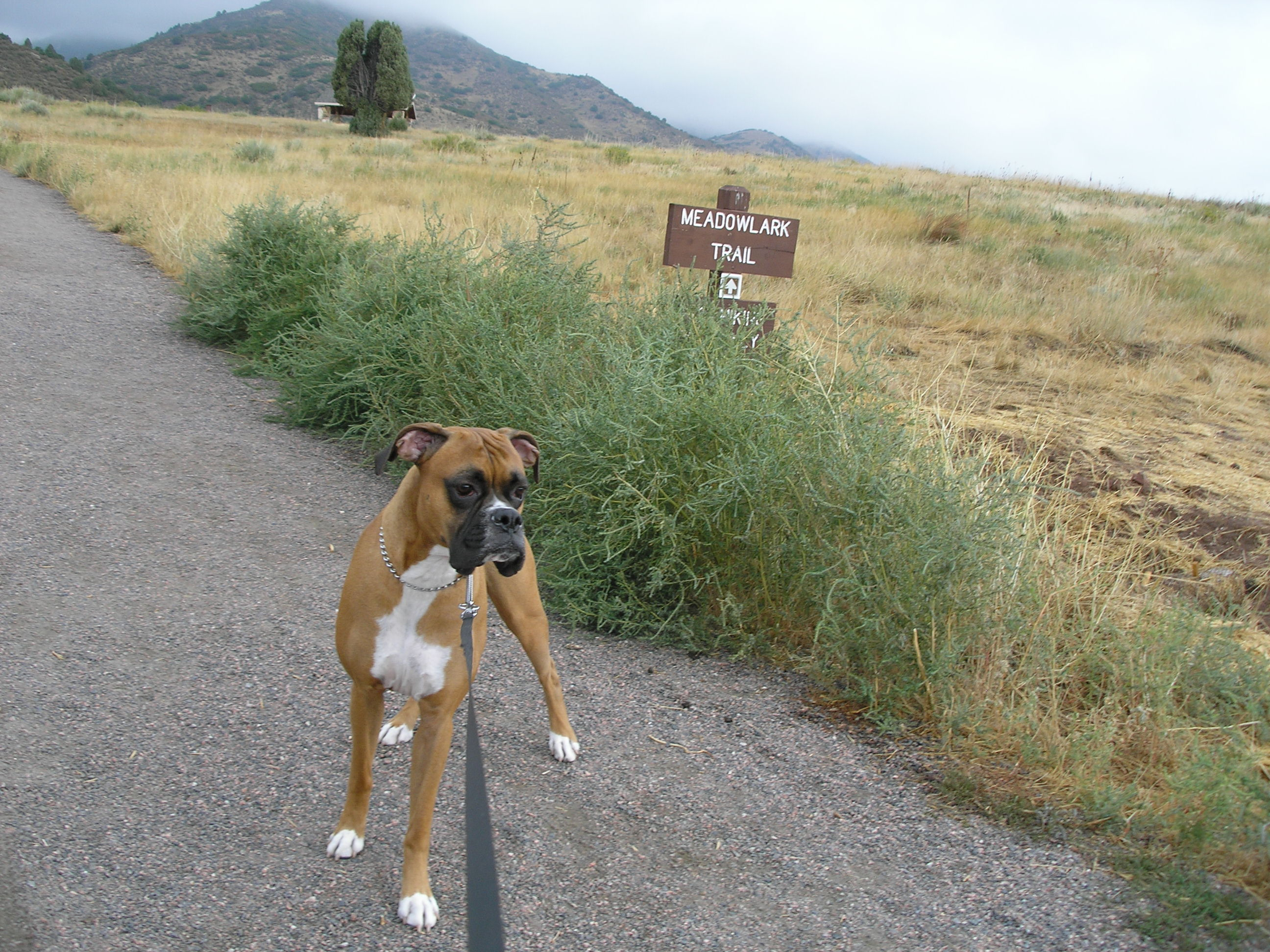 Meadowlark Trail Loop