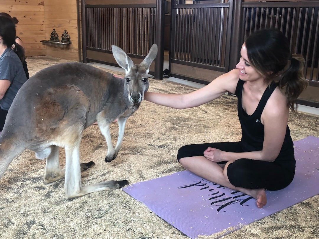 kangaroo yoga